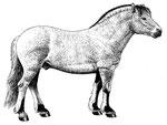 Cheval de fjord - L'inventaire de animaux domestiques (Nathan)