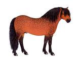 Poney Dartmoor - L'inventare des animaux domestiques (Nathan)