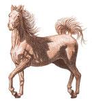 Cheval au trot - Apprendre à dessiner les chevaux (Fleurus)