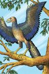 Archéoptéryx - Les animaux préhistoriques - Editions Hachette