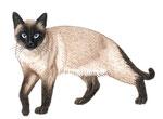 Chat siamois - Apprendre à dessiner les chats (Fleurus)
