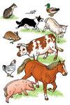 Les animaux domestiques- Dictionnaire School (Larousse)