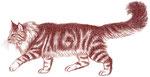 Chat mainecoon - Apprendre à dessiner les chats (Fleurus)