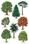 Les arbres - Dictionnaire School (Larousse)