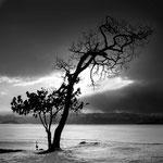 北海道 屈斜路湖 2013.02.20