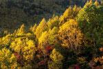 長野 八千穂高原 2012.10.17