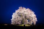 山梨 わに塚の桜 2013.03.27