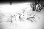 北海道 美馬牛 2013.02.19