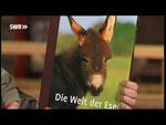 """Dennis stellt den Bildband """"Die Welt der Esel"""" von Boiselle vor."""
