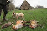 Nutria!!!! und zwei Füchse aus einer Strohmiete