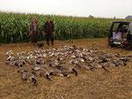 Wildschadensbegrenzung für unsere Bauern - und viele leckere Gänsebraten
