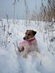 Erle vom Hof Copray im Schnee