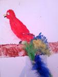 Le perroquet de Clément, 6 ans (aquarelle et collage de plumes)