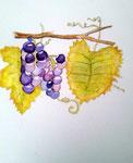 Grappes de raisin de Maélys, 8 ans (aquarelle)