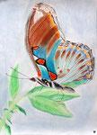 Papillon, pastel de Emily, 12 ans