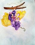 Grappes de raisin de Rose, 7 ans et demi (aquarelle)