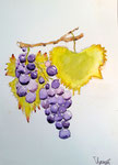 Grappes de raisin  de Thomas (9 ans et demi)