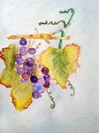 Grappes de raisin d'Antoine 8 ans (aquarelle)
