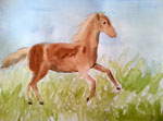 Cheval de Jeanne, 11 ans (aquarelle)