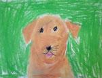 Chien de Nawfel, 6 ans (pastel)