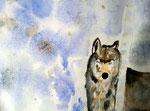 Loup d'Eloïse, 11 ans (aquarelle sur papier)