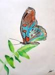 Papillon, pastel de Manon, 12 ans