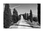 31/10/2011 Crete Senesi - Filare di cipressi