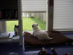 My Jack Russell Sadie is my studio doggie :)