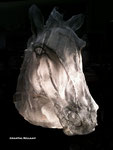 Tête de cheval - CB