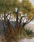 Muret avec olivier