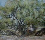 Anier sous l'olivier