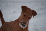 Bridie erster Schnee 2013