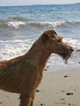 Barry am Strand - 3 Jahre