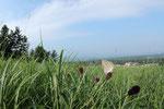 2013/08/11  鳥取県西伯郡伯耆町