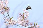 2016/04/02  兵庫県加古川市