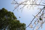2013/04/05  兵庫県加古川市