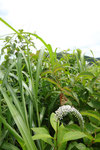 2011/07/09  兵庫県美方郡香美町