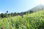 2015/08/08  鳥取県西伯郡伯耆町