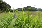 2012/10/06  兵庫県加古川市