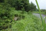 2011/07/02  兵庫県美方郡香美町