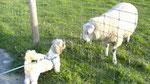 Hundeliebe übern Zaun