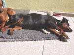 So ein Sonnenbad, ist nicht zu verachten!!