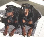 Geeva und Sally, beim Sonnenbaden!!