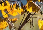 Farben des Herbstes - dke