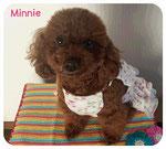Minnieちゃん