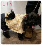LINちゃん