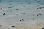 marée basse #1
