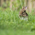 Petit lapin (1_052016M)