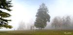 Brouillard à  Aix les bains Mémard  SAVOIE  2016