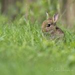 Petit lapin (4_052016M)